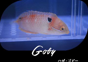 Gpby ハゼ・ゴビー