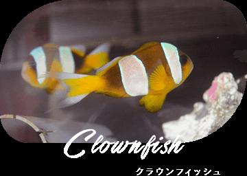 Clownfish クラウンフィッシュ