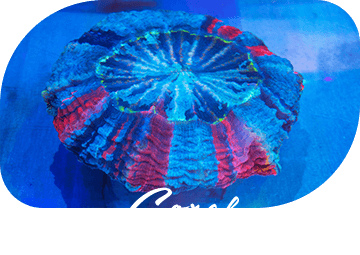 Coral サンゴ