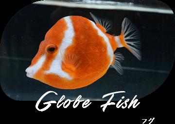 Globe Fish フグ